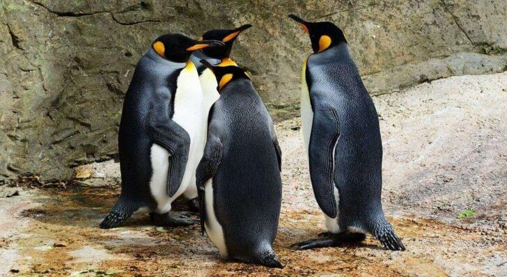 Linuxをデスクトップマシンとして常用するか検討してみました。(2019年)